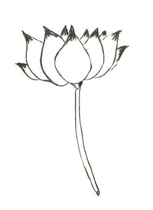 florbudis